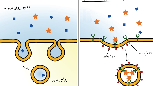 Organismos pluricelulares yahoo dating