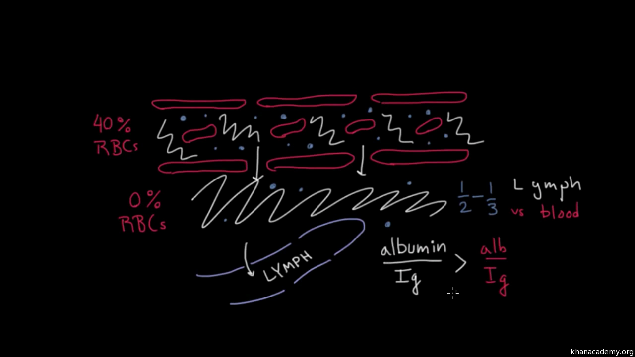 The Lymphatic Systems Role In Immunity Video Khan Academy