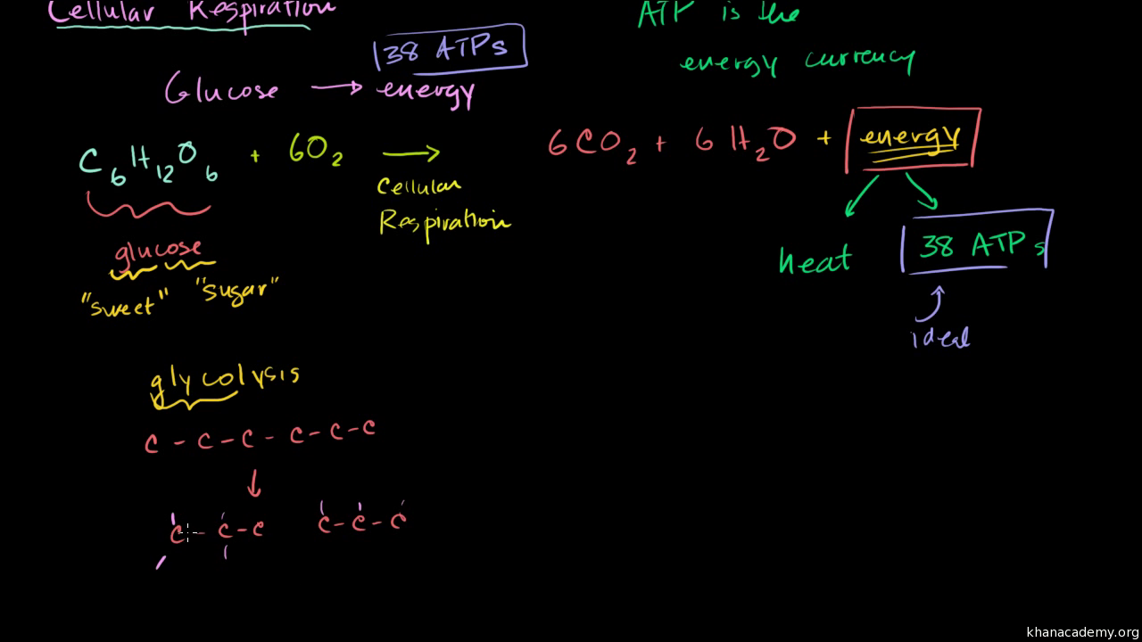 Cellular Respiration Introduction Biology Video Khan Academy Eukaryotic Cell Diagram Labeled Free Download Or Printable Math