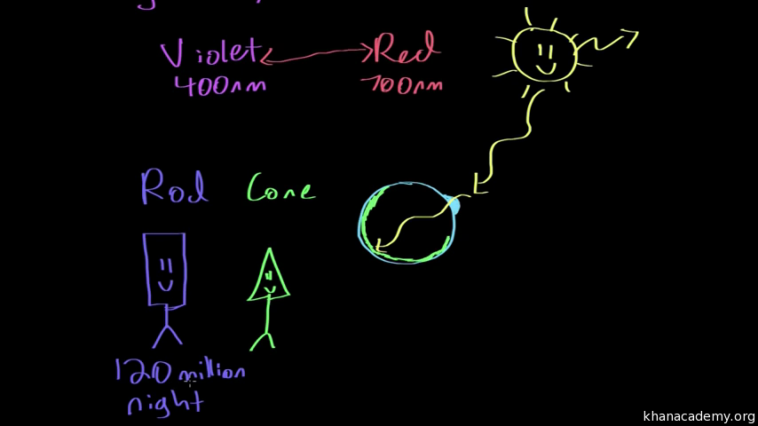 The structure of the eye video khan academy ccuart Images