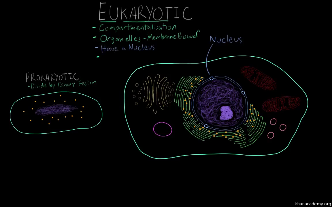Characteristics Of Eukaryotic Cells Video Khan Academy Functional Anatomy Prokaryotic And
