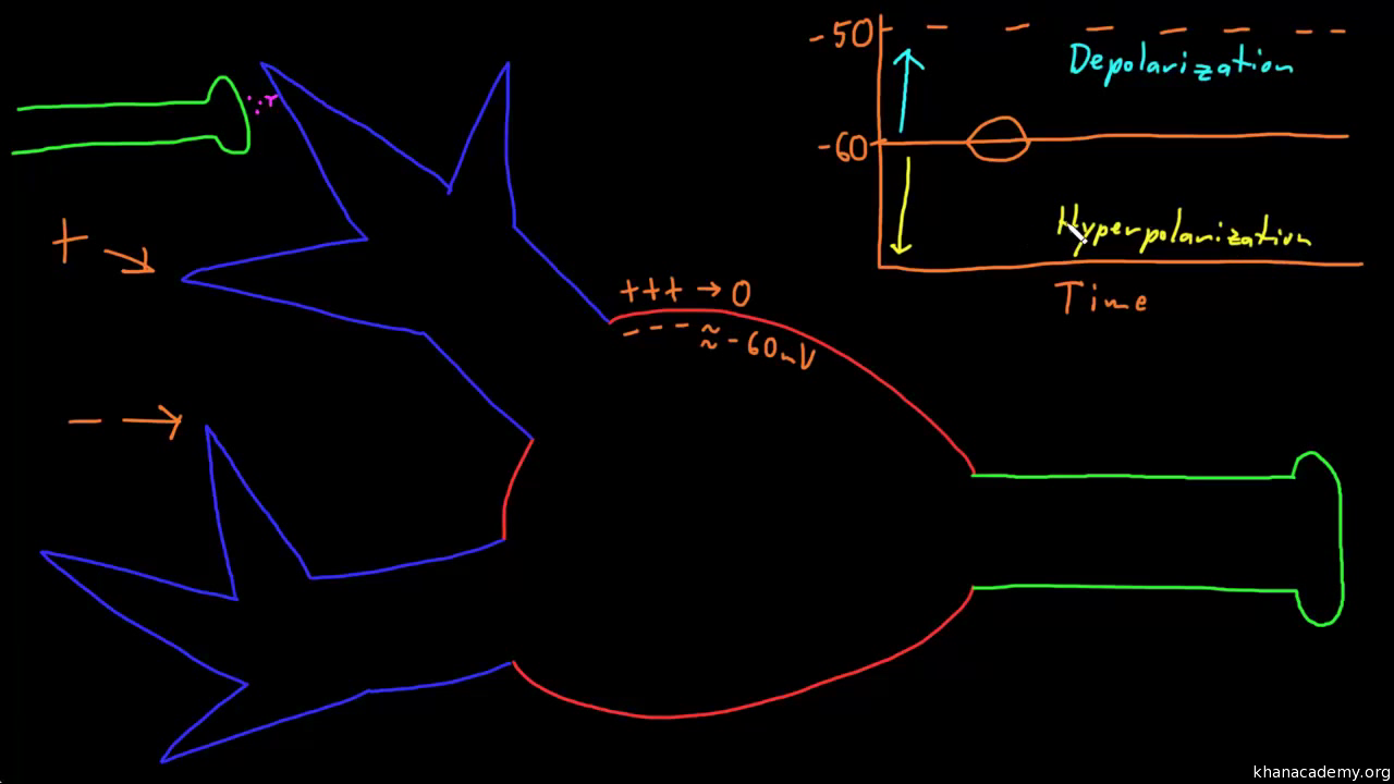 Neuron Action Potentials The Creation Of A Brain Signal Article Electricity In Khan Academy