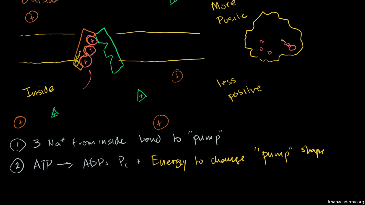 Motor unit (video) | Khan Academy