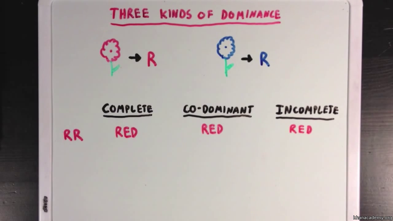 Co dominance and incomplete dominance video khan academy robcynllc Images
