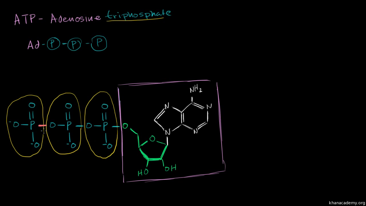 Overview Of Metabolism Article Khan Academy Simple Plant Cells Diagram Cell Basic