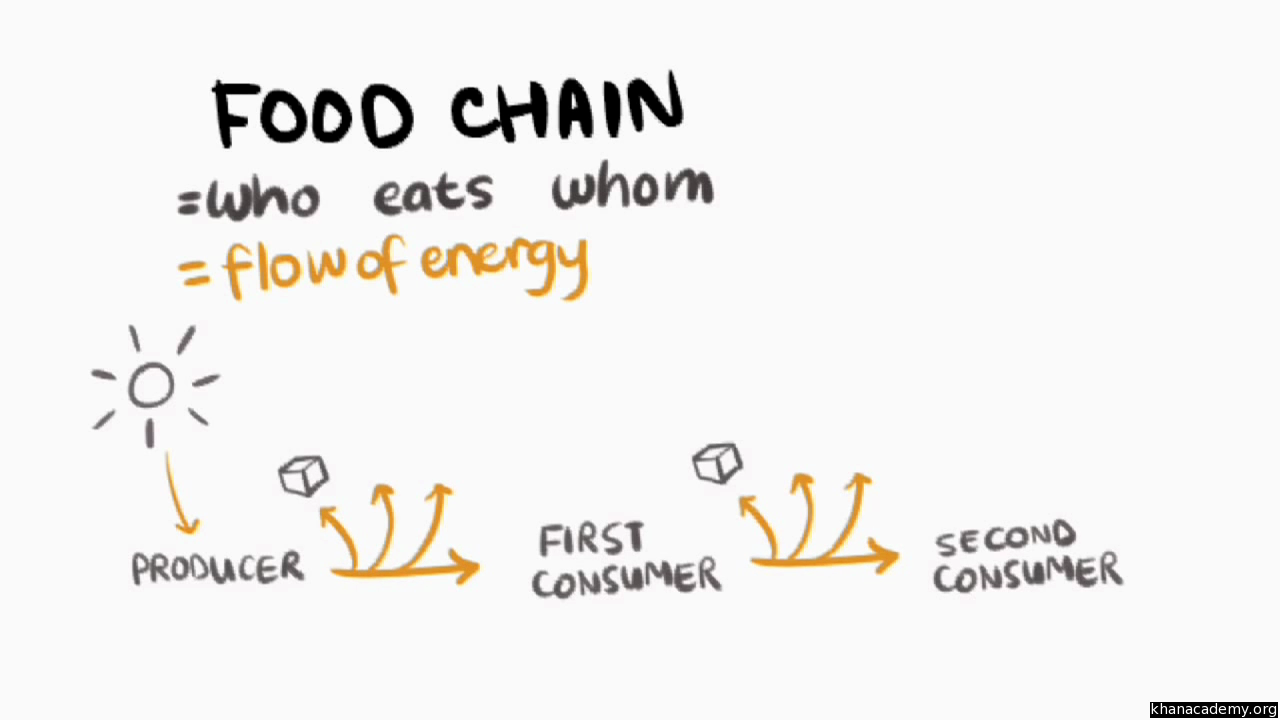 The Food Chain Film Mit K12 Khan Academy