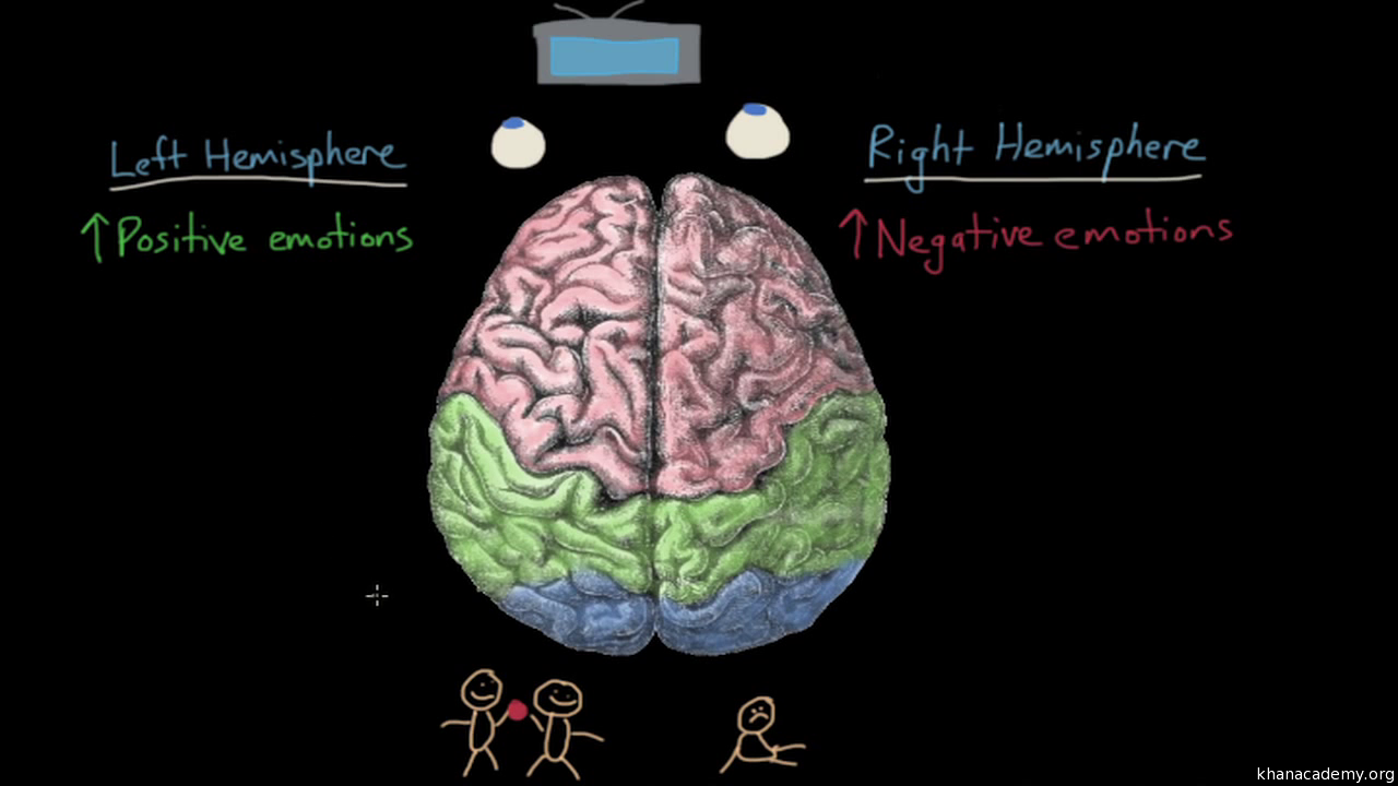 Limbic system: structure and function | Emotion (video) | Khan Academy