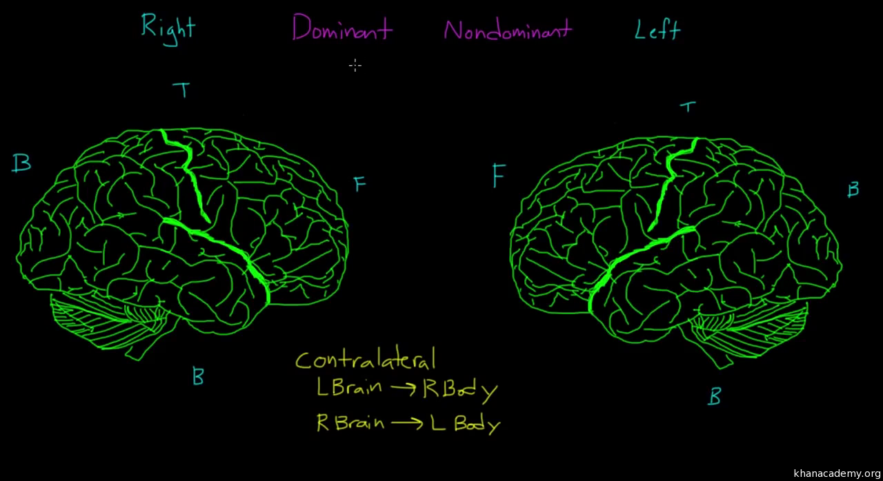 The old brain video behavior khan academy ccuart Gallery