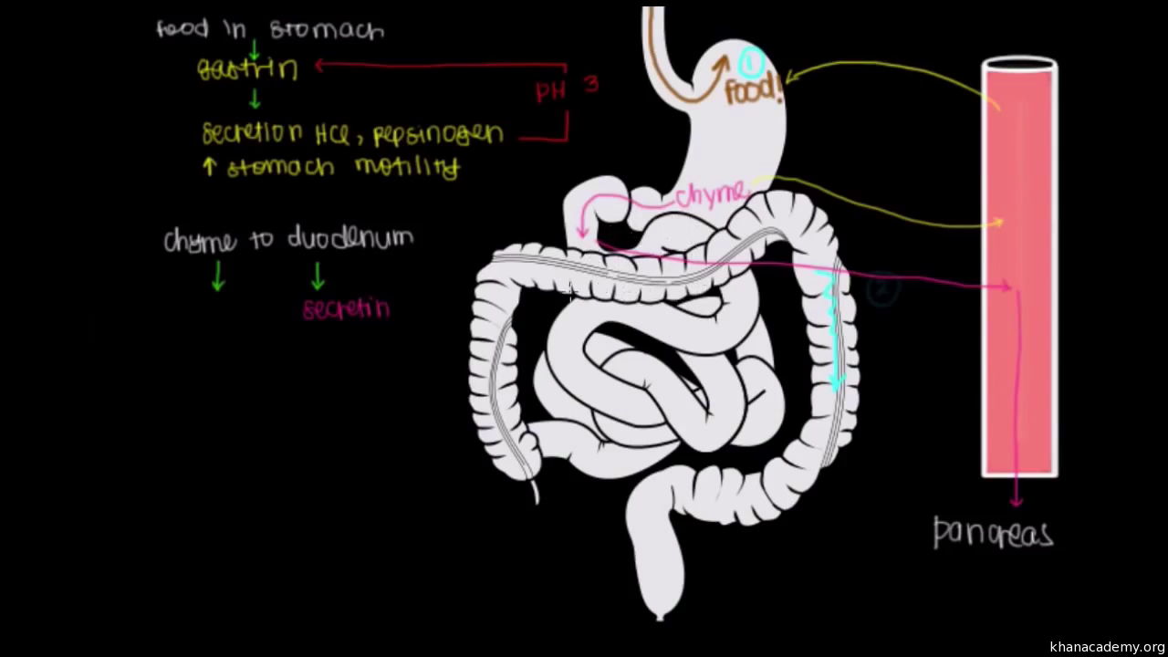 Human anatomy and physiology   Health and medicine   Science   Khan ...