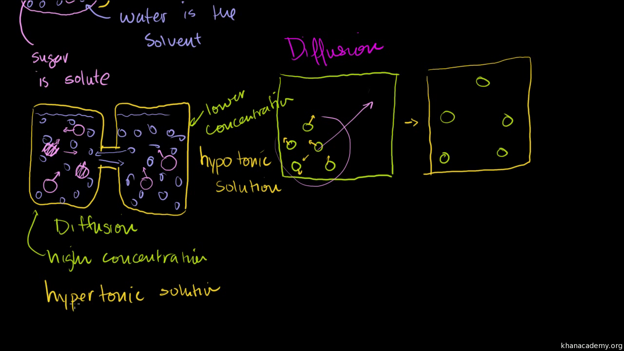 Diffusion And Osmosis Video Khan Academy
