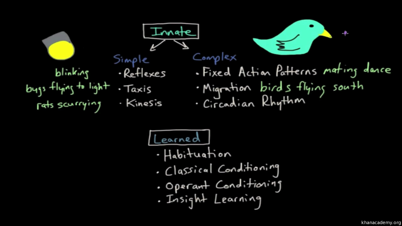 Operant Conditioning Innate Vs Learned Behaviors Video Khan Academy
