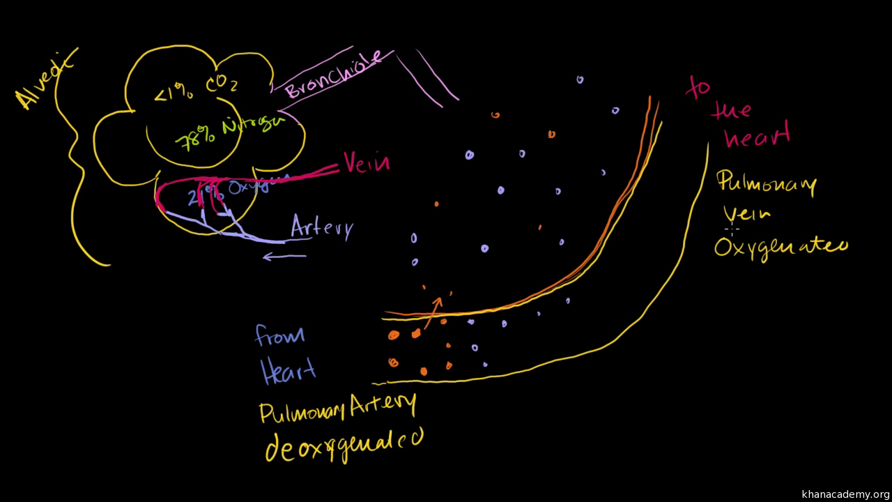 Components Of Blood Article Khan Academy Red And White Cell Diagram Cells