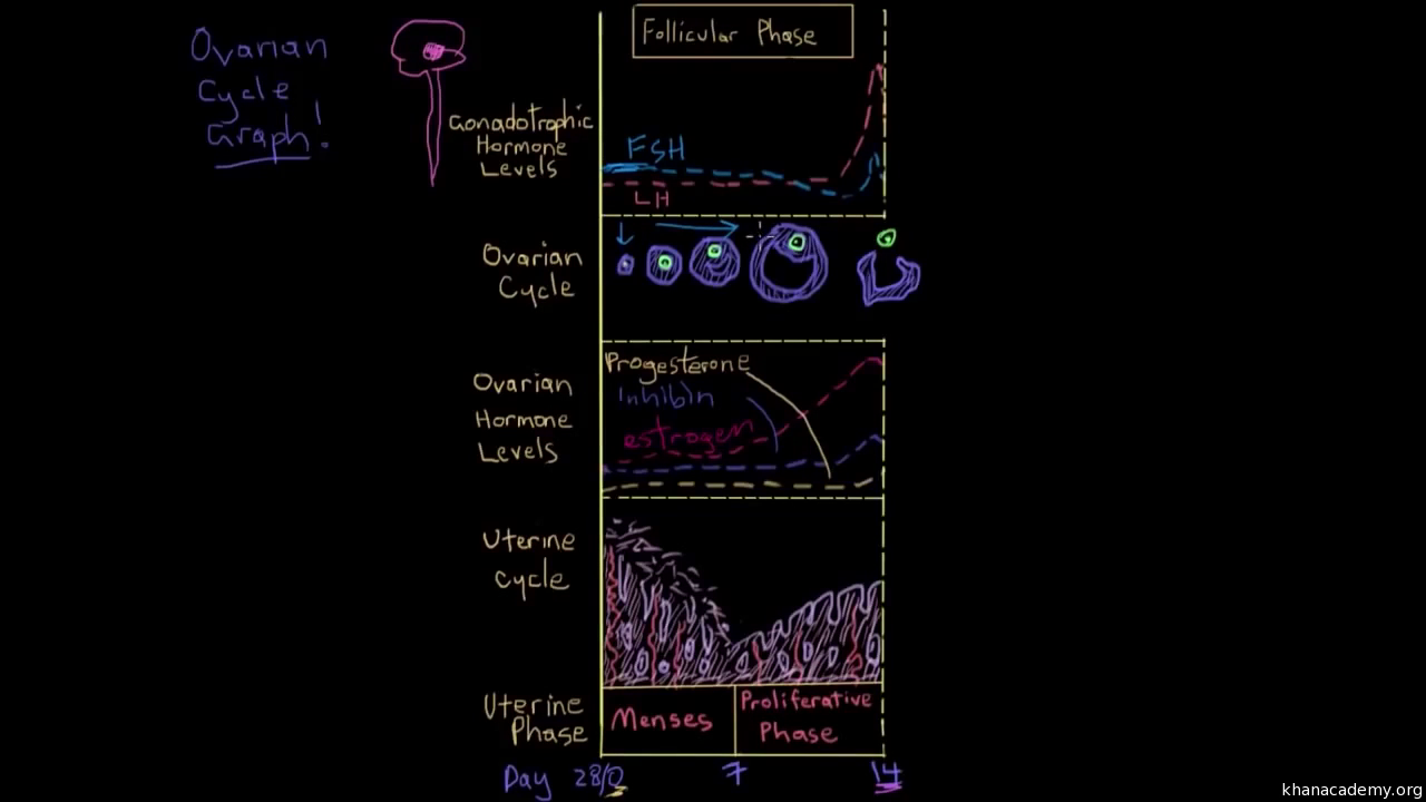 Reproductive system questions (practice) | Khan Academy