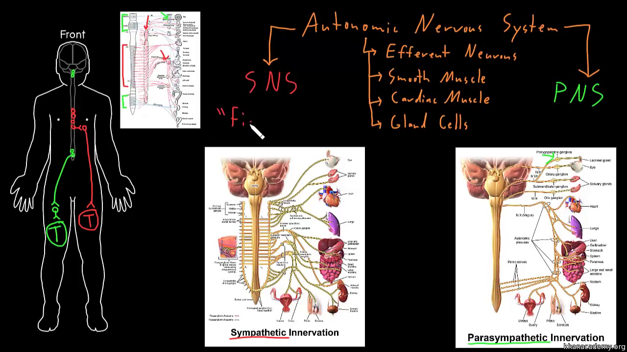Human anatomy and physiology | Health and medicine | Science | Khan ...