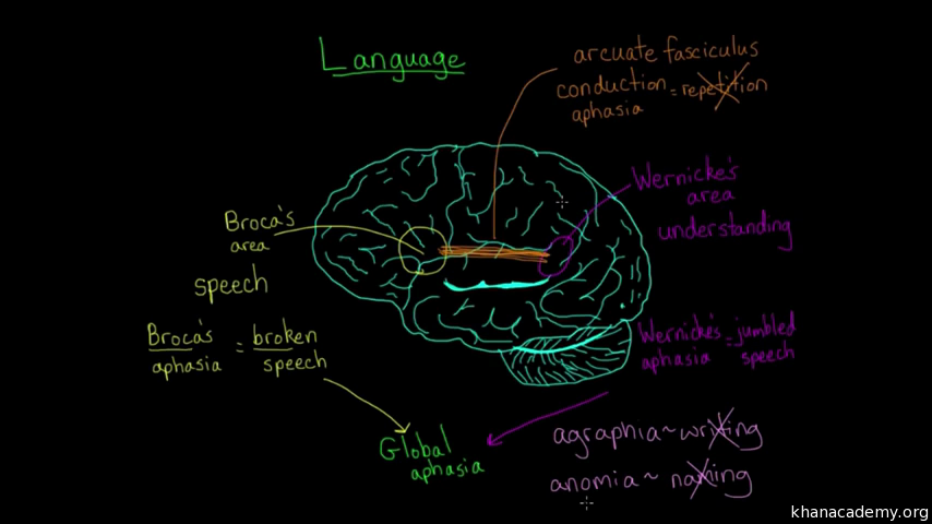 Executive systems of the brain health and medicine khan academy ccuart Image collections