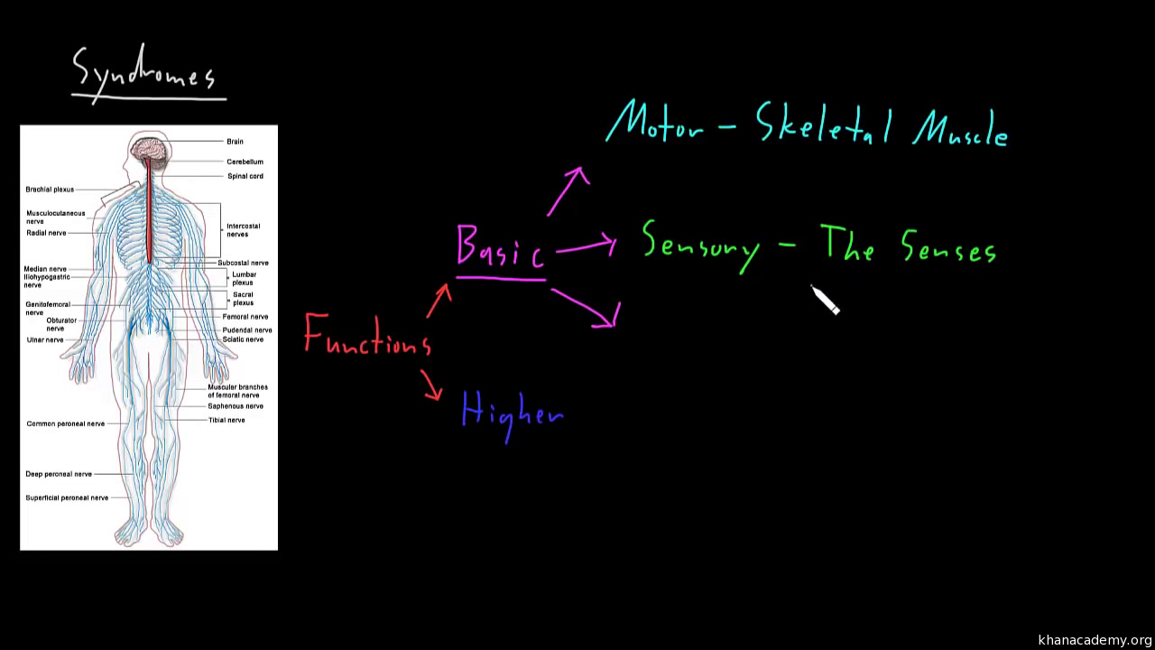 Cerebral Cortex Video Khan Academy Simple Diagram Of The Brain Lesson Plan Basic Anatomy For