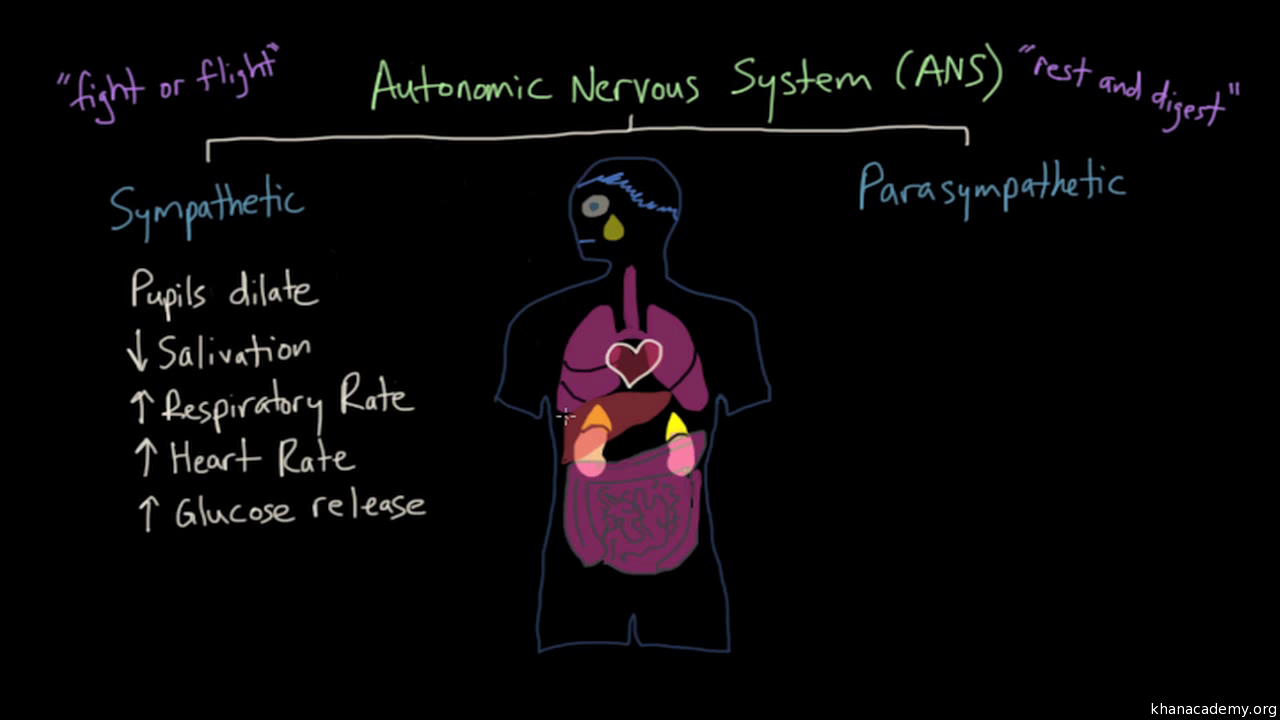 limbic system: structure and function   emotion (video)   khan academy