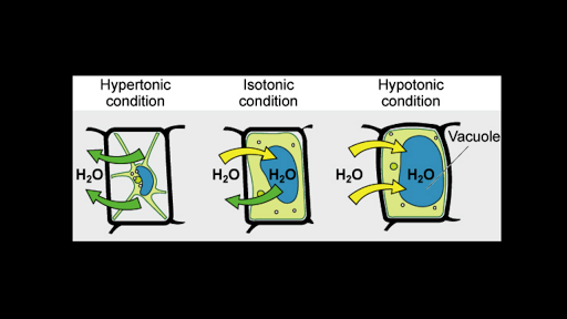 Tonicity: hypertonic, isotonic & hypotonic solutions