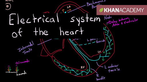 the cardiovascular system intrinsic conduction system answers