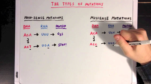 The Different Types Of Mutations Video Khan Academy
