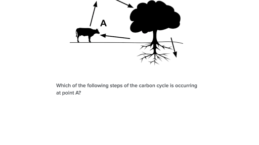 The carbon cycle video Ecology – Nutrient Cycle Worksheet