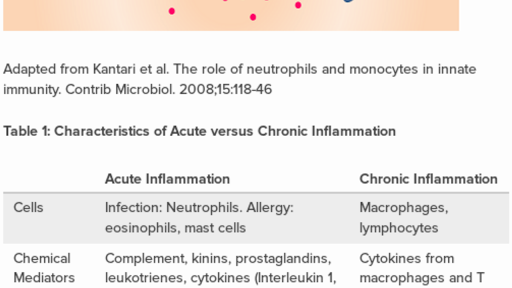 Immunology of acute vs  chronic inflammation (practice