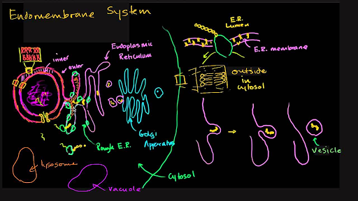 Structure of a cell | Biology | Science | Khan Academy