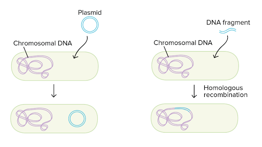 Bacteria reproduce asexually through a process called causes