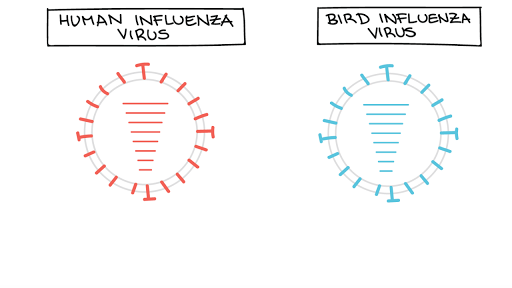 They Used To Call It Influenza Di >> Evolution Of Viruses Article Viruses Khan Academy