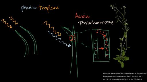 Plant Biology Science Khan Academy