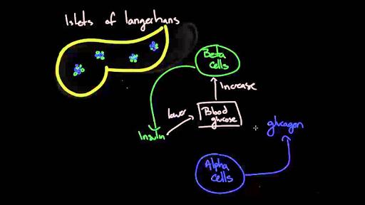 Pathophysiology - Type I diabetes
