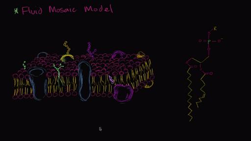 Membranas y transporte   Biología   Ciencia   Khan Academy