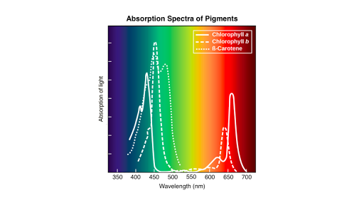Wavelengths Of Light And Photosynthetic Pigments Article Khan