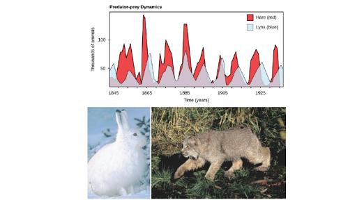 Predation Herbivory Article Ecology Khan Academy