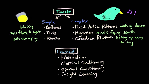 Operant Conditioning Shaping Video Khan Academy