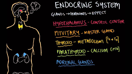 Endocrine gland hormone review
