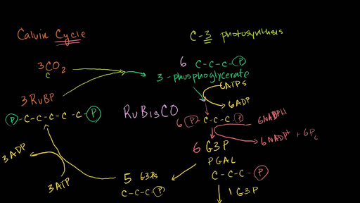 Photosynthesis | Biology | Science | Khan Academy