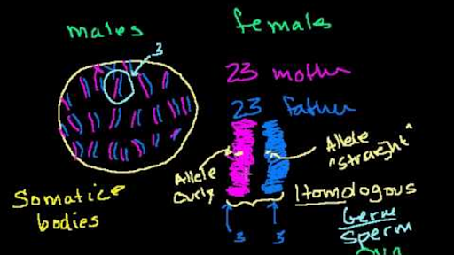 Evidence For Evolution Article Khan Academy