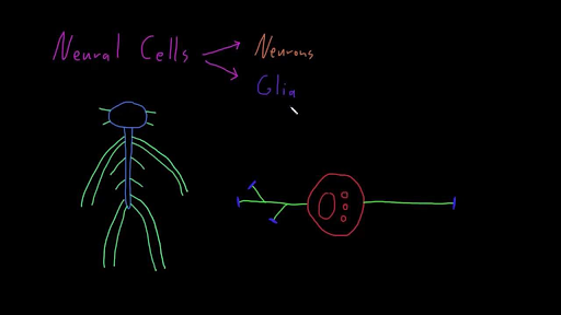 Introduction to neural cell types