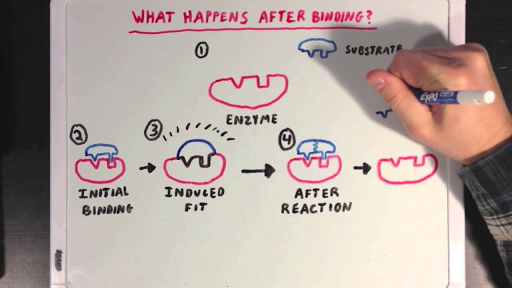 Enzyme structure and function article khan academy ccuart Image collections