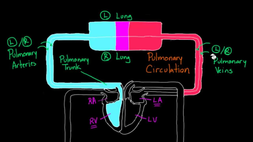 circulatory system introduction