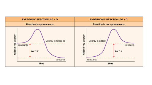 Free Energy Endergonic Vs Exergonic Reactions Article Khan Academy