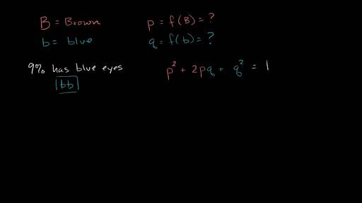 hardy weinberg equation mcat