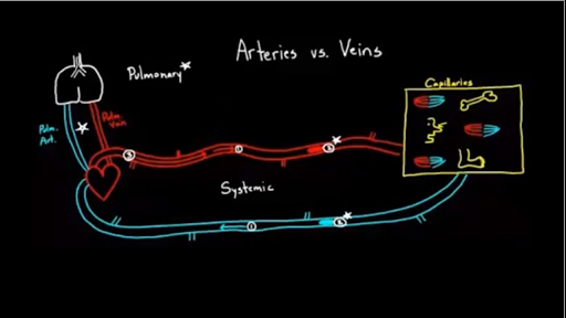 Arteries vs. veins - what\'s the difference? (video) | Khan Academy