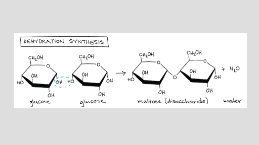 Introduction To Macromolecules Article Khan Academy