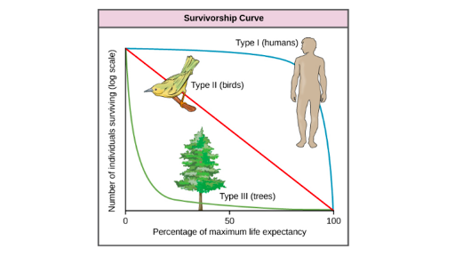 Life tables, survivorship curves & age-sex structure (article