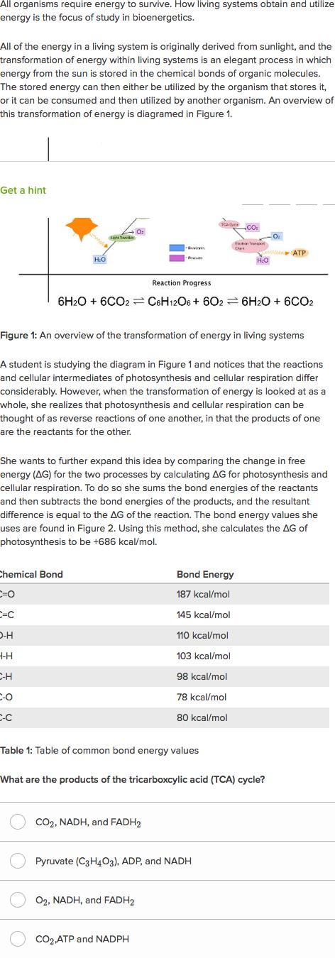 Photosynthesis making energy answer key worksheet - xingtorlemo