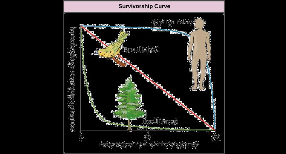Life tables, survivorship curves & age-sex structure