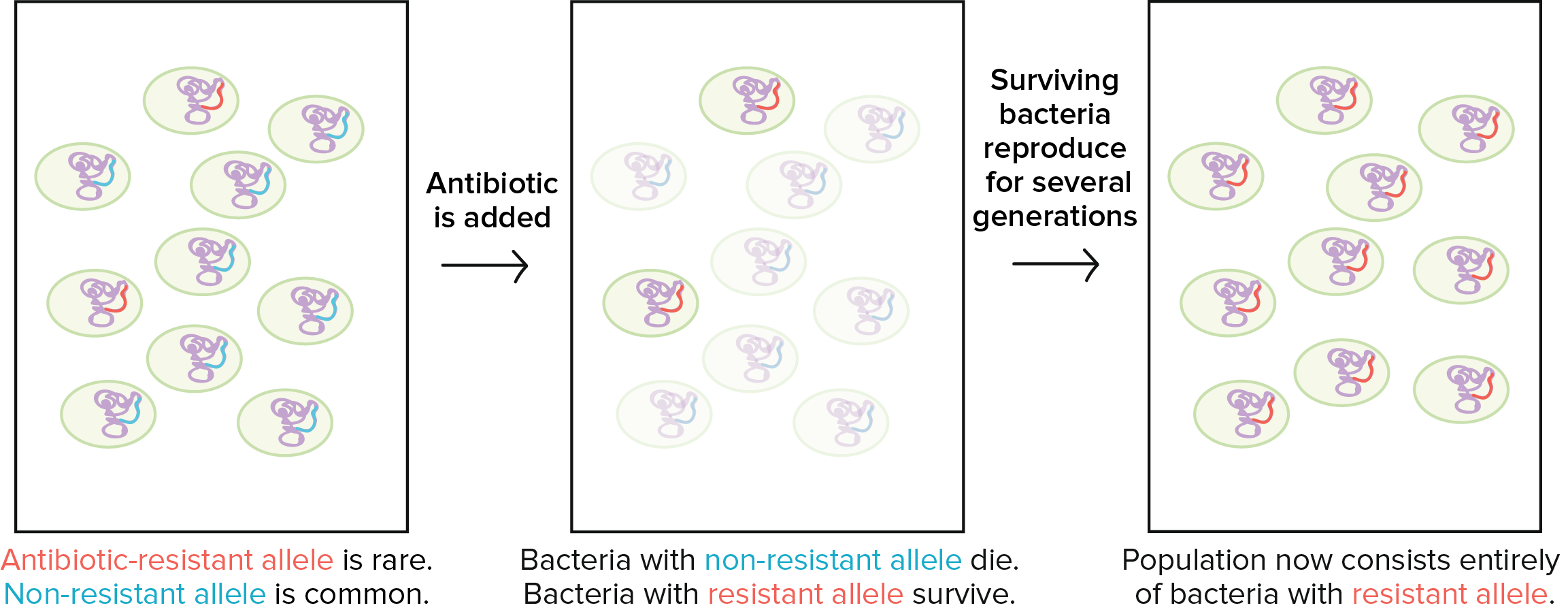 Conjugation, transformation & transduction | Bacteria (article