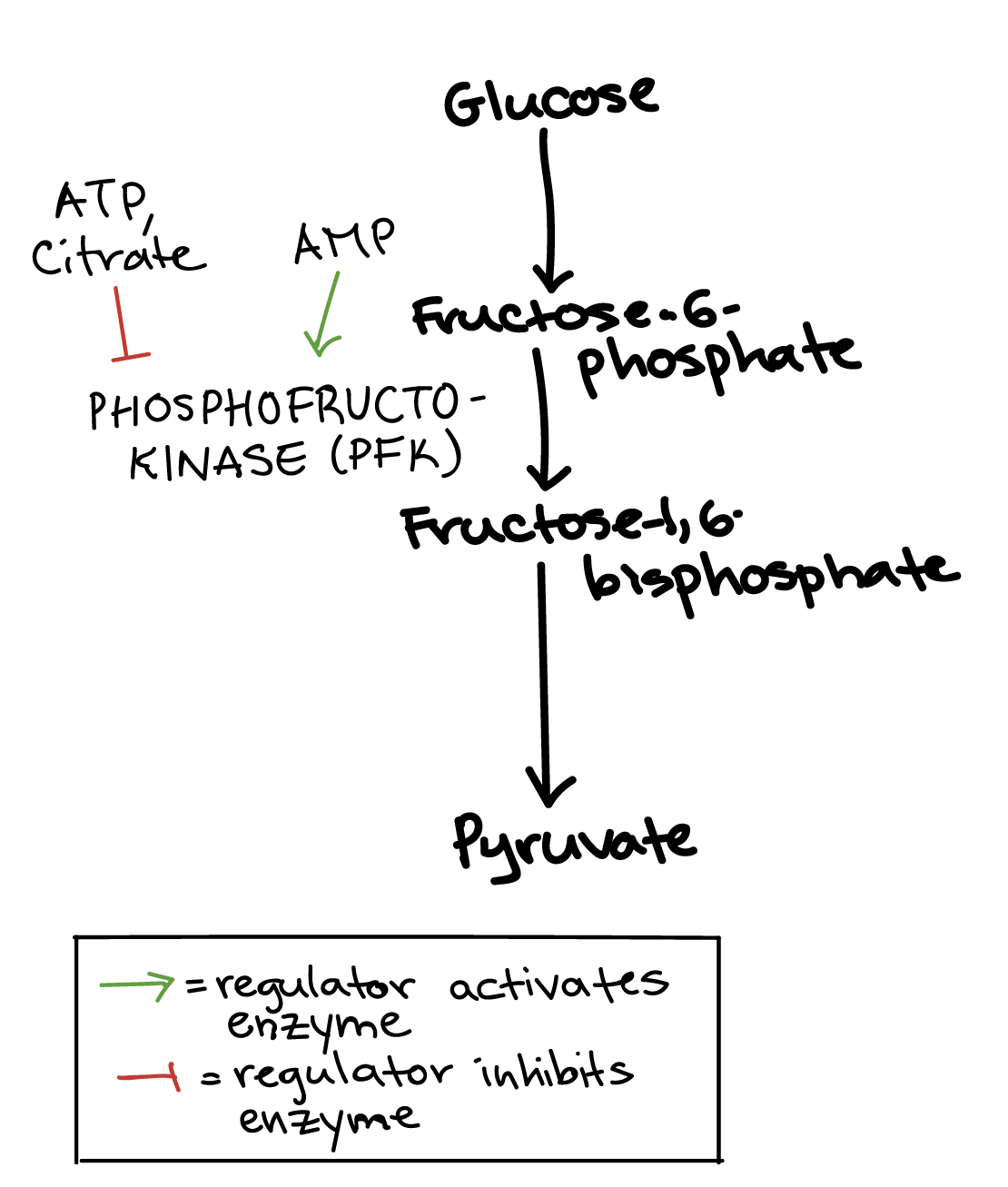 describe the role of enzymes in metabolism